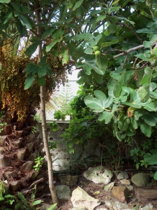 hierdie dun stammetjie is 'n avokadoboom wat my kind met 'n pit geplant het